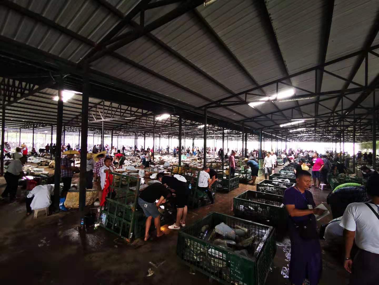 中缅边境_缅甸人抢矿,中国人抢料,翡翠原石市场真疯狂